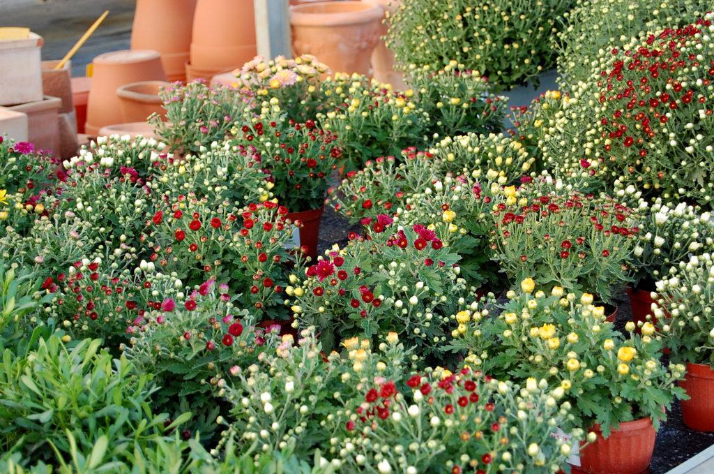 Il vivaio ca de frati ad arezzo propone un 39 ampia for Fiori primaverili da giardino